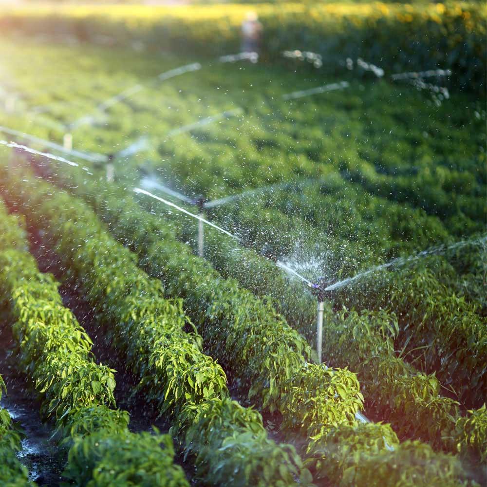 Irrigation System Repair Service