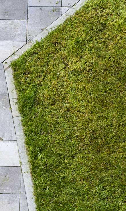 Good Guys Property Maintenance Inc Lawn Dethatching