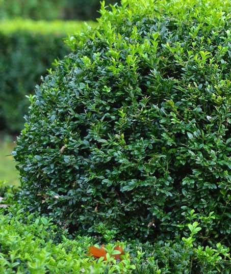Good Guys Property Maintenance Inc Shrubs & Hedges