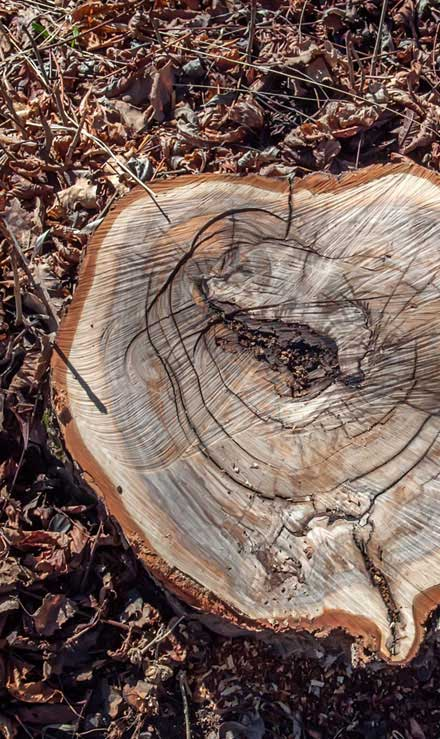 Good Guys Property Maintenance Inc Tree Removal