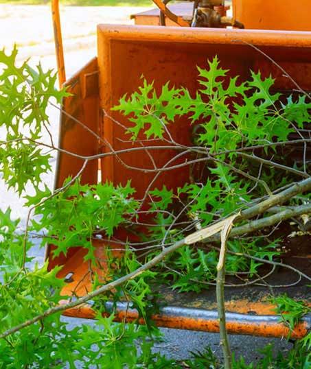 Good Guys Property Maintenance Inc Tree Trimming