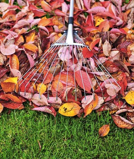 Good Guys Property Maintenance Inc Fall Clean Up